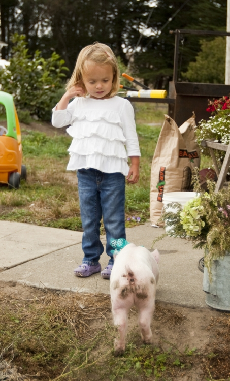 Gianna getting to know her new pig