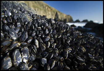 More mussels...