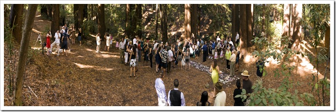 Wedding in the redwoods