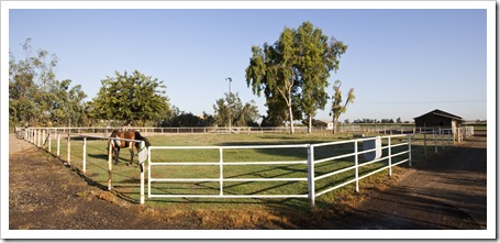 Cheyenne and the horse paddocks