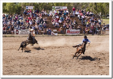The rodeo in Belt