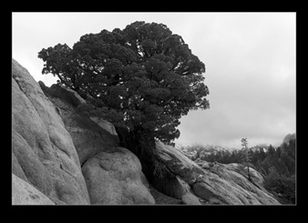 Granite and Tree