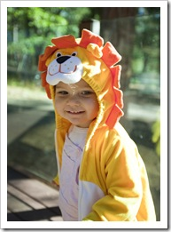 I'm going to be a lion for Halloween!
